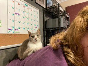 Official Boss Cat Murderface